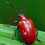 Pest Management: How to Rid of the Pests Enjoying our Gardens Flavor