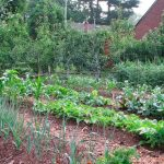 How to Harvest Vegetables and Fruit